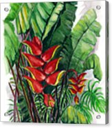 Tiger Claw .. Heliconia Acrylic Print