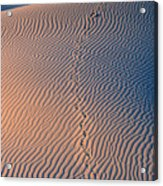 Tracks At First Light In Death Valley Acrylic Print