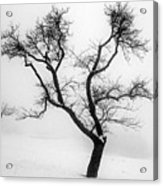 Tree In The Snow Acrylic Print