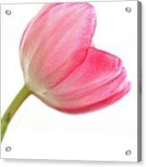 Tulip Acropolis Acrylic Print