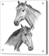 Two Horses Heads Acrylic Print