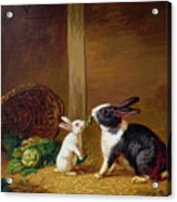 Two Rabbits Acrylic Print by H Baert
