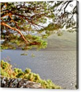 Warmth  Of The Pine Branch. Acrylic Print