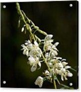 White Fireweed Acrylic Print