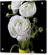 White Ranunculus In Yellow Vase Acrylic Print