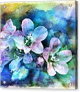 Wildflowers 5  -  Polemonium Reptans - Digital Paint 4 Acrylic Print