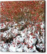 Winter Harvest 2 Acrylic Print