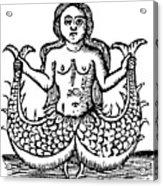 Mermaid, 1520 Acrylic Print