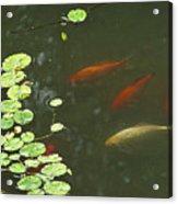 0158- Koi Acrylic Print