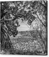030715 Palo Duro Canyon 105 6 7 Acrylic Print