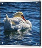 071118-50-c Acrylic Print