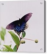 080706-5 Acrylic Print