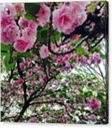 09032015056 Acrylic Print