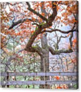 0981 Fall Colors At Starved Rock State Park Acrylic Print