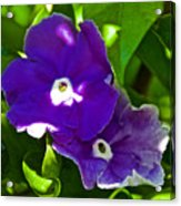 Purple Flowers In Pilgrim Place In Claremont-california Acrylic Print