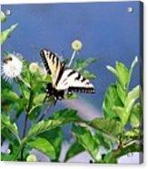 080706-7 Acrylic Print