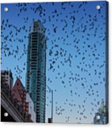 1.5 Million Mexican Free-tail Bats Overtake The Austin Skyline As They Exit The Congress Avenue Bridge Acrylic Print