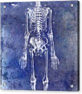 1911 Anatomical Skeleton Patent Blue Acrylic Print