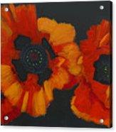 3 Poppies Acrylic Print