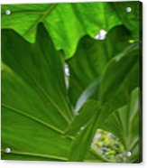 4327 - Leaves Acrylic Print