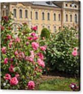 A Beautiful Rose Bush Castle Park 1 Acrylic Print