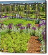 A Corridor Of Purple Sage Flowers And Stachys Lanata Sunlit Acrylic Print