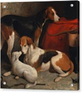 A Couple Of Foxhounds With A Terrier - The Property Of Lord Henry Bentinck  Acrylic Print