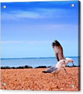 A Day At The Beach Acrylic Print