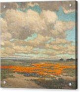 A Field Of California Poppies Acrylic Print