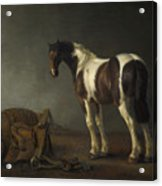 A Horse With A Saddle Beside It Acrylic Print