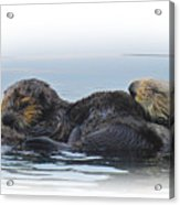A Mama Sea Otter And Her Babe Acrylic Print