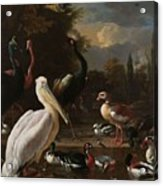 A Pelican And Other Birds Near A Pool, Known As The Floating Feather, Melchior D Hondecoeter, Acrylic Print