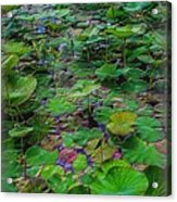 A Pretty Pond Full Of Lily Pads At A Water Temple In Bali. Acrylic Print
