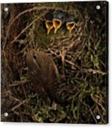 A Visit To The Nest Acrylic Print