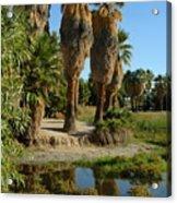 Agua Caliente Park Acrylic Print