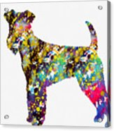 Airedale Terrier Acrylic Print