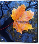 All About Autumn Acrylic Print