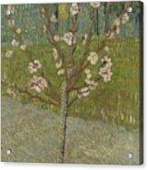 Almond Tree In Blossom Arles, April 1888 Vincent Van Gogh 1853 - 1890 Acrylic Print