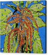 Amaranthus Sold Acrylic Print