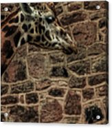 Amazing Optical Illusion - Can You Find The Giraffe Acrylic Print