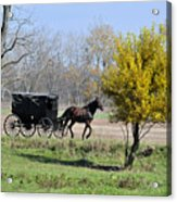 Amish Buggy Late Fall Acrylic Print