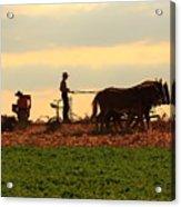 Amish Farmer Acrylic Print