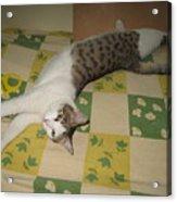 Ammani The Cat Acrylic Print