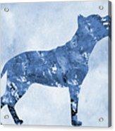 Amstaff-blue Acrylic Print