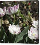 Angelique Peony Tulips Acrylic Print