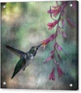 Anna's Hummingbird Acrylic Print