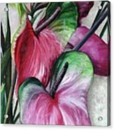 Anthuriums Acrylic Print
