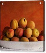 Apricot Delight Acrylic Print