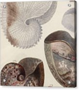 Aquatic Animals - Sea - Shells - Composition - Alien - Wall Art  - Interior Decoration  Acrylic Print