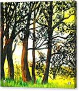 Arbutus Acrylic Print